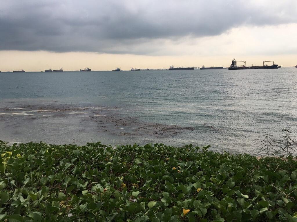 Самостоятельная поездка в Сингапур: интересные места и встреча с голливудскими звёздами_141